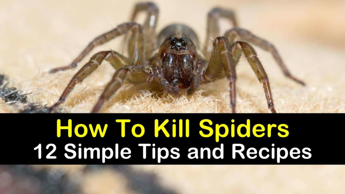 12 Simple Ways to Kill Spiders