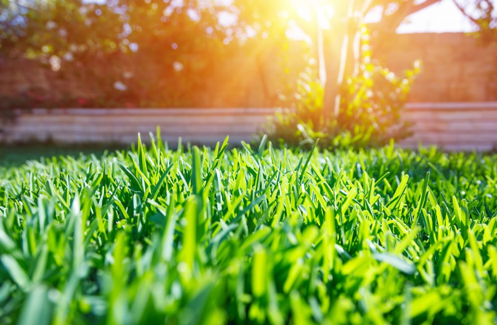8 Tips to Keep Lawn Green in Summer Heat