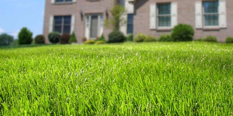 How Do I Keep My Grass Green in the Summer?