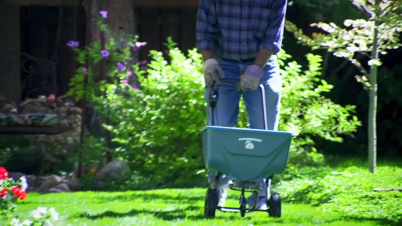 How Often Should You Fertilize Your Lawn?