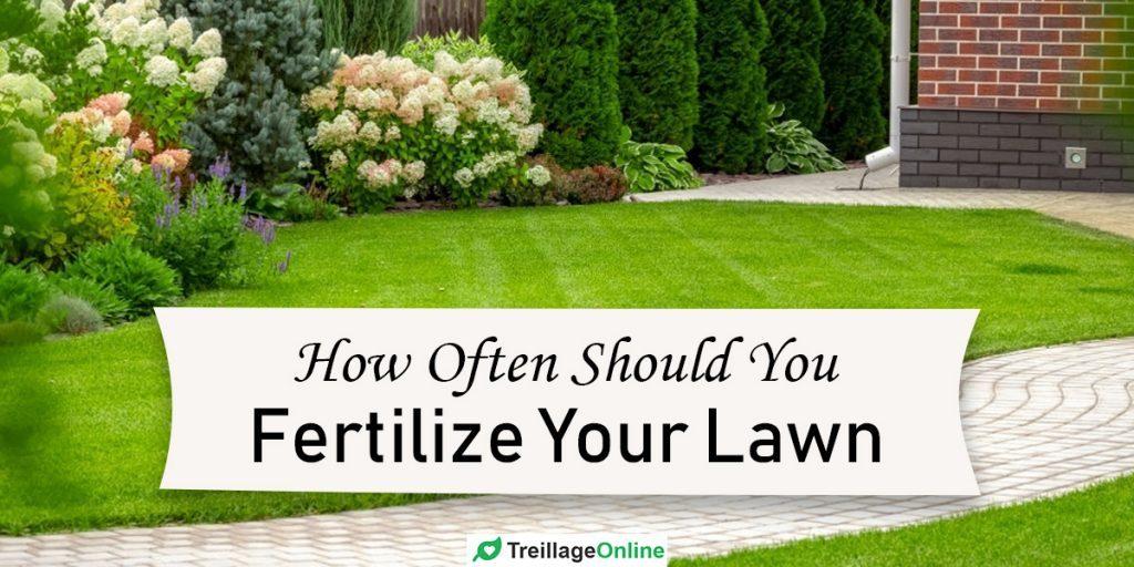 How Often Should You Fertilize Your Lawn ...