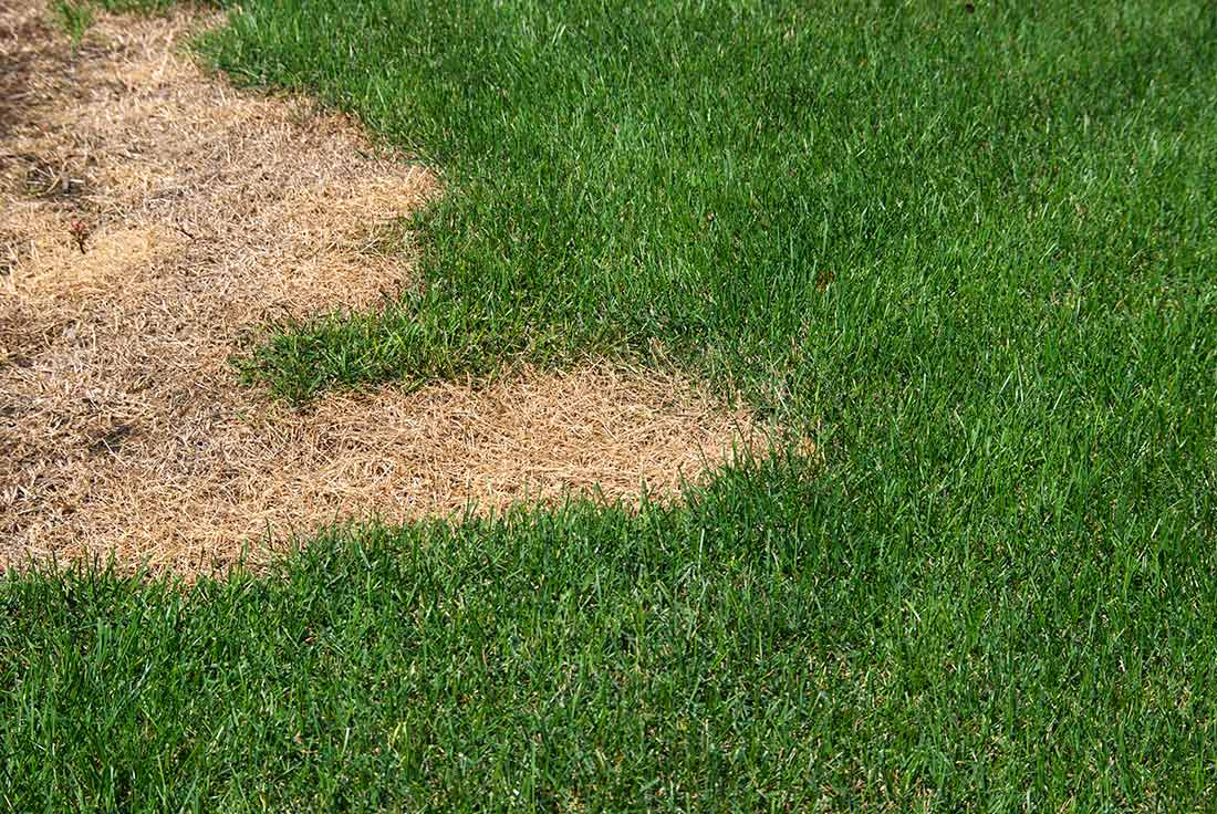 How to Fix Dead Patches and Fill Bare Spots in the Lawn ...