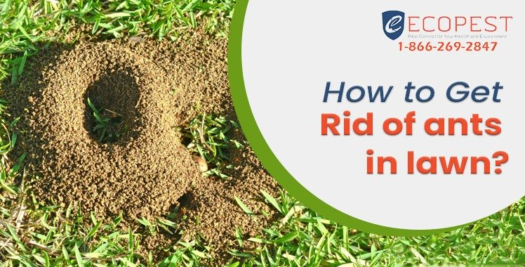 How to get rid of ants in lawn? Get Rid of Ants in Grass ...