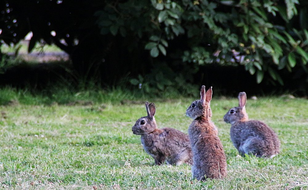 How to Keep Rabbits Off Your Garden or Land
