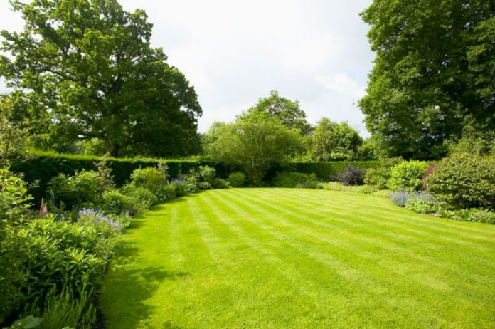how to keep your lawn green and healthy during summer