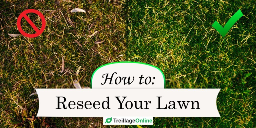 How To Overseed or Reseed Your Lawn The Right Way?