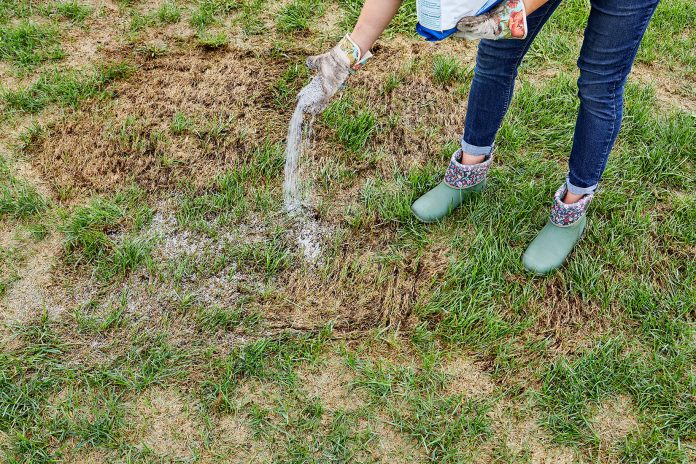 how to repair patchy spots in your lawn better homes