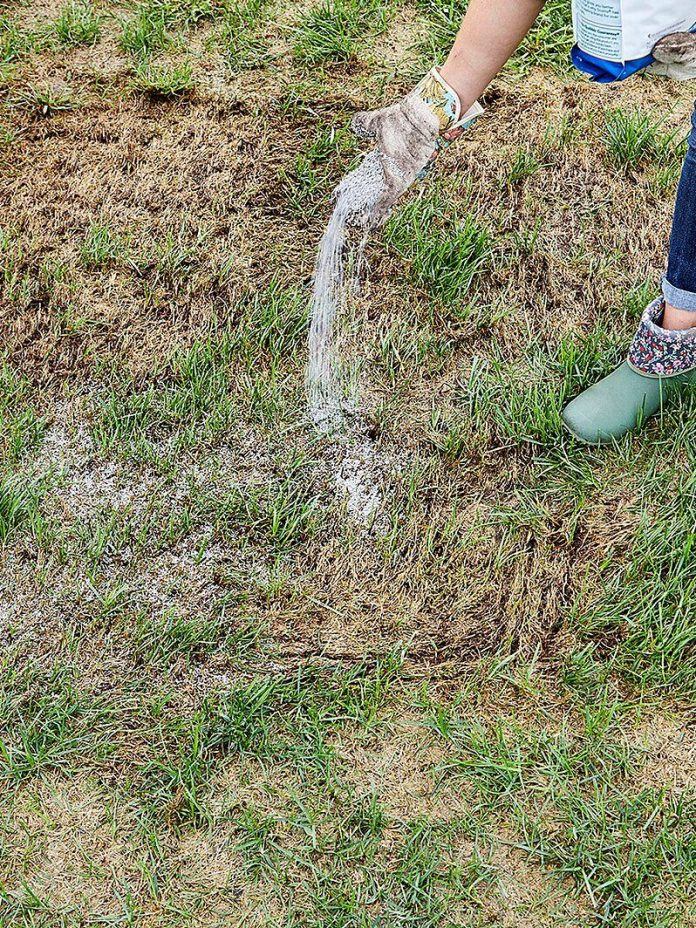 how to repair those bare patchy spots in your lawn in