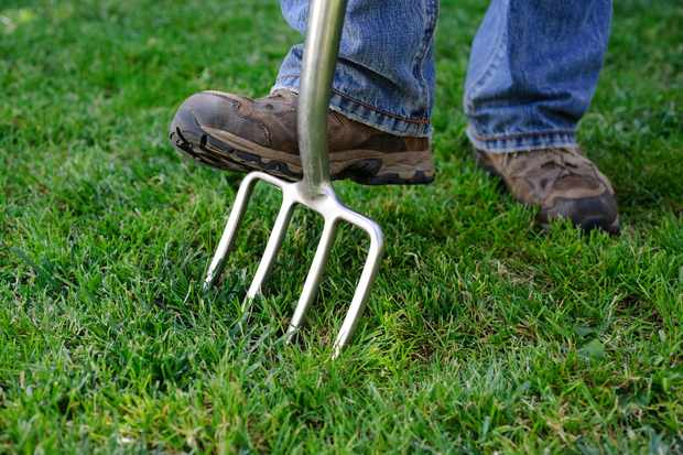 Improve your lawn in 12 weeks