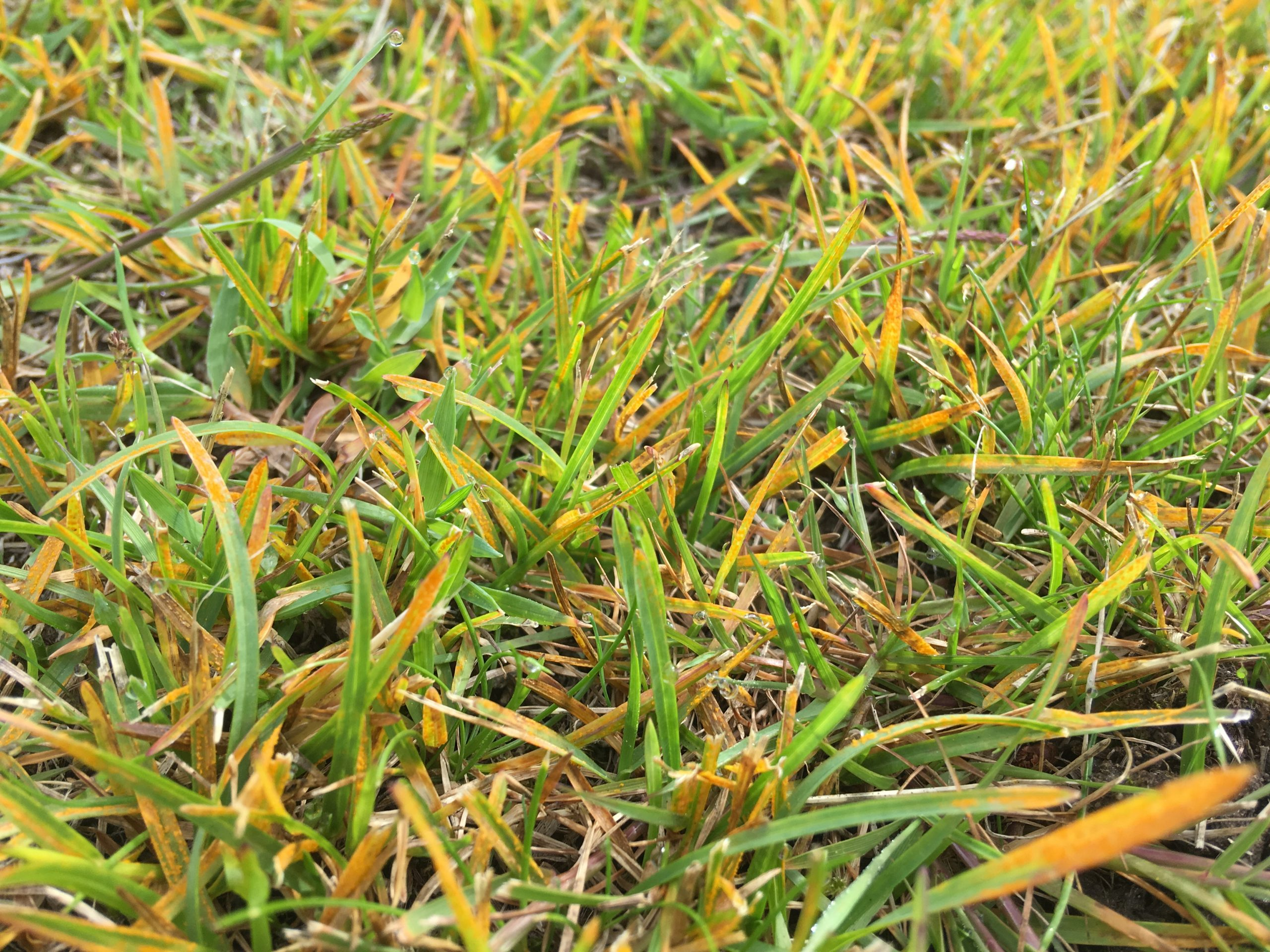 Pests and Lawn Diseases