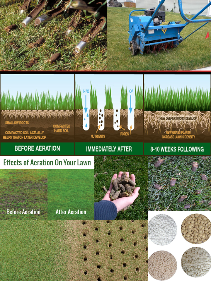 What Does Aerate Lawn Mean