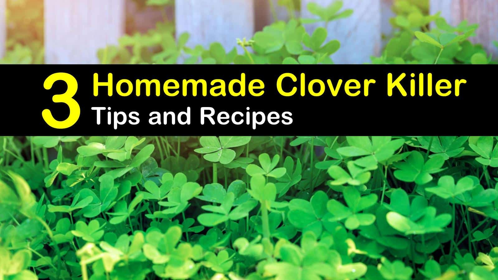 What Kills Clover But Not Grass / Clover Weed Control In ...