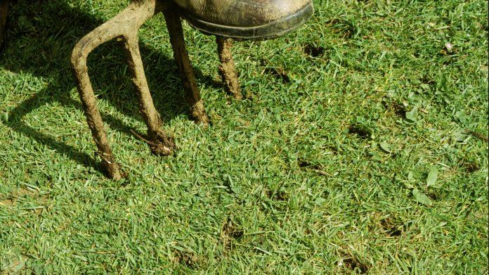 when should you aerate your lawn aumondeduvin com